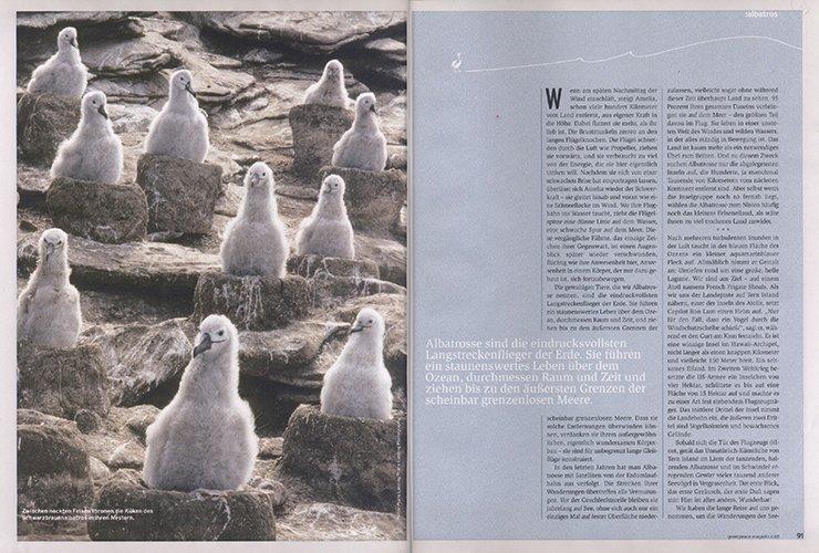 Beitrag über Albatrosse